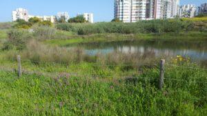 טבע עירוני תל אביב